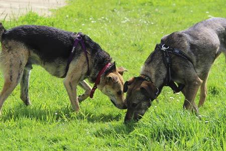 Chimney Farm International dog rescue